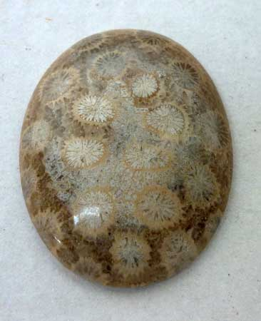 Indonesia Fossil Coral Cabochon